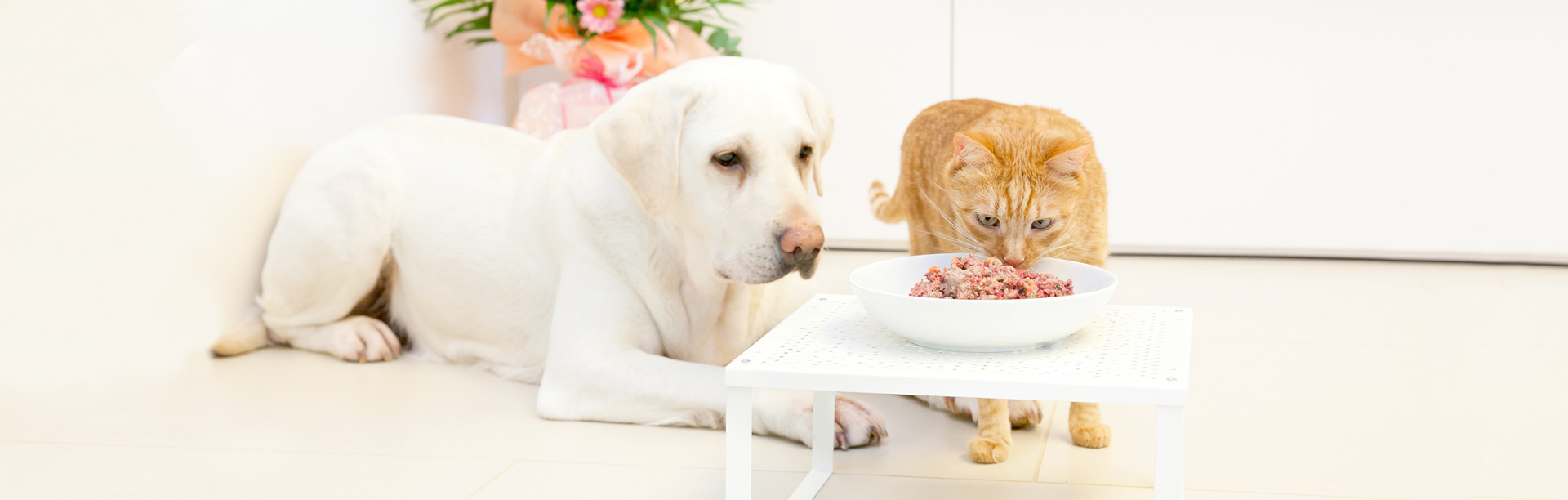 BARF храни за домашни любимци