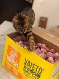 vaisto-cat_1.jpg