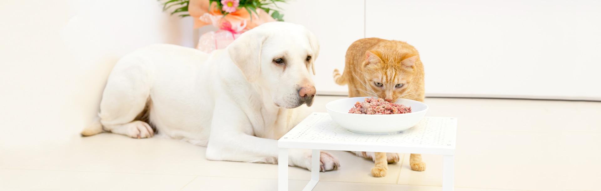 high quality BARF and organic pet food